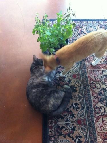 Feline Friday: Drug wars part 4
