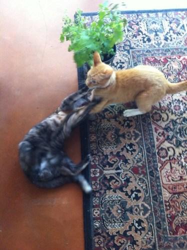 Feline Friday: Drug wars part 1