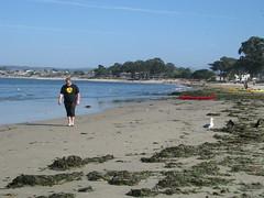 Royce on the beach