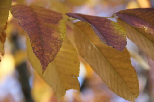 Fall in Denver