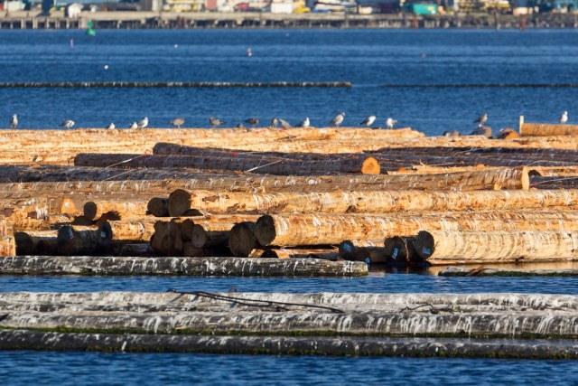 Port Angeles harbor logs