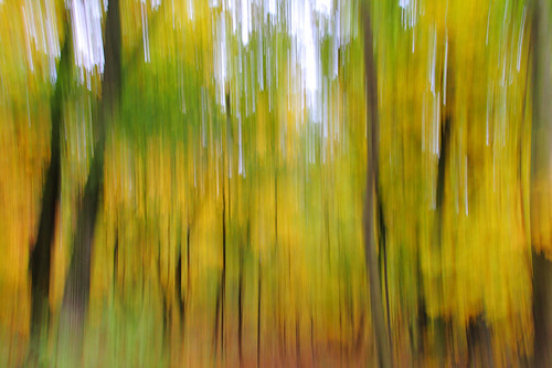 """forest in up and down • <a style=""""font-size:0.8em;"""" href=""""http://www.flickr.com/photos/22289452@N07/6302063099/"""" target=""""_blank"""">View on Flickr</a>"""