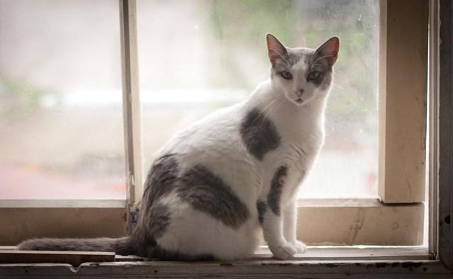 Hostel Cat in San Jose