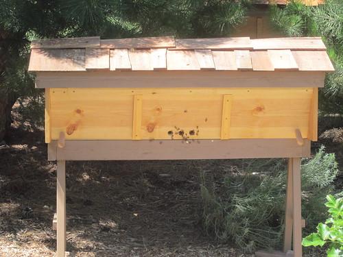 Jan's hives