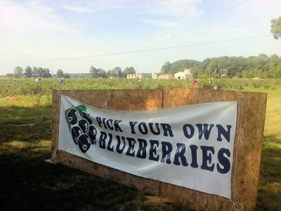 blueberry farm