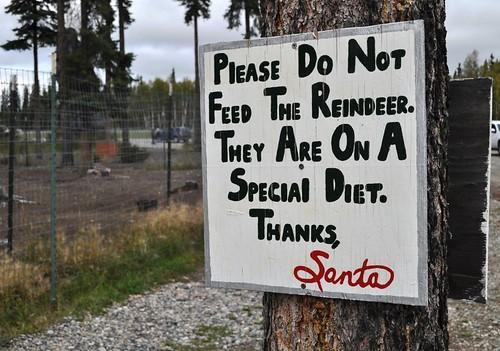 Reindeer on Special Diet, North Pole, Alaska