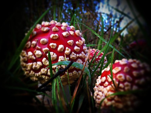 Marvellous Mushrooms! by ScruffyDan and Breanne