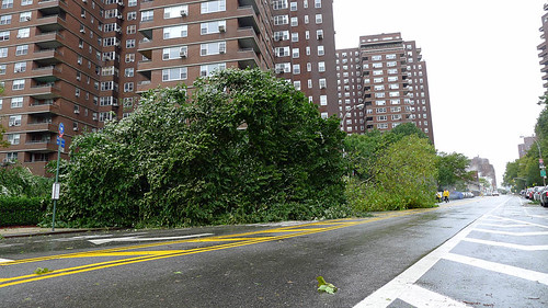 Grand & FDR Dr - Trees Down-1