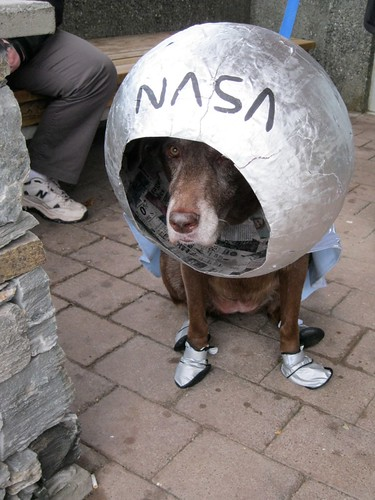 Huuna the space dog