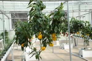 hydroponics kits
