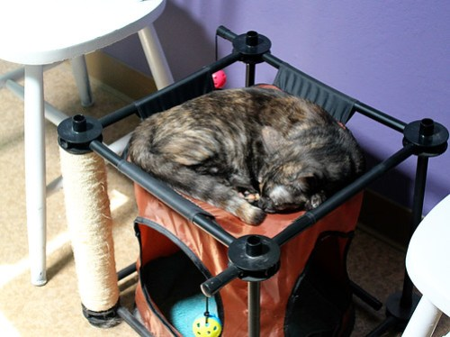 Pixel in her hammock