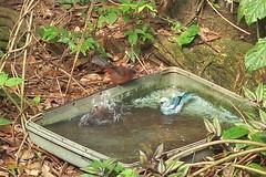 Esse é o banho da passarada... vai entoando o canto nesse v erão!