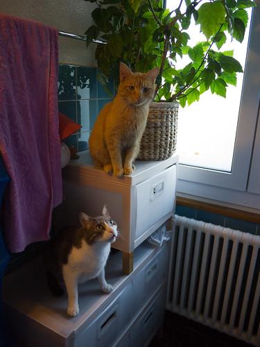 New Cats 88.jpg
