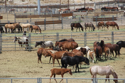 Wild Horse Sanctuary
