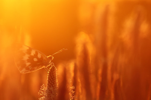 """butterfly-5 minutes before sunset • <a style=""""font-size:0.8em;"""" href=""""http://www.flickr.com/photos/22289452@N07/7809917230/"""" target=""""_blank"""">View on Flickr</a>"""