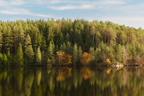 """Forest in November • <a style=""""font-size:0.8em;"""" href=""""http://www.flickr.com/photos/22289452@N07/10613943424/"""" target=""""_blank"""">View on Flickr</a>"""