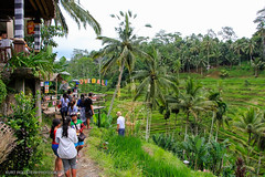 """Bali Reise 2016 • <a style=""""font-size:0.8em;"""" href=""""http://www.flickr.com/photos/126718395@N05/27244826505/"""" target=""""_blank"""">View on Flickr</a>"""