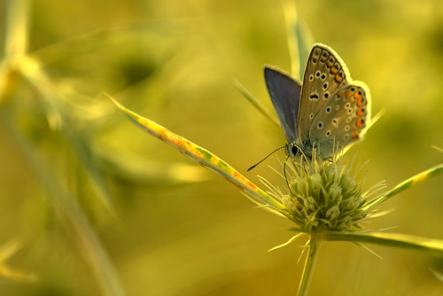 """butterfly in yellow light • <a style=""""font-size:0.8em;"""" href=""""http://www.flickr.com/photos/22289452@N07/9395644360/"""" target=""""_blank"""">View on Flickr</a>"""