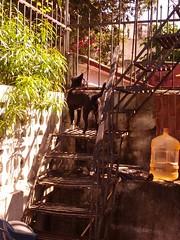 Diablo on Stairs