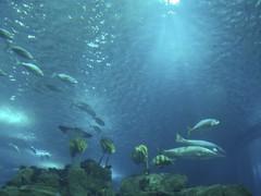 Bassin principal Aquarium Lisbonne