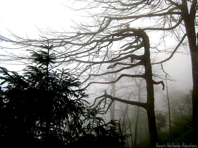 Foggy Trees at Emei Shan