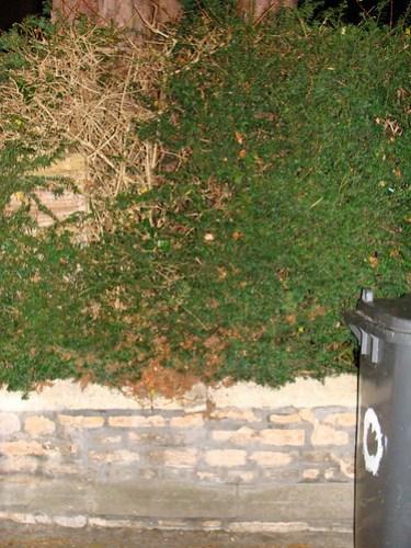 Jar No 338 in situ 02