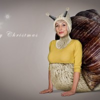 Merry Christmas, It's A Lady Snail Sheep