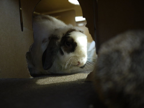 betsy in the bunny maze
