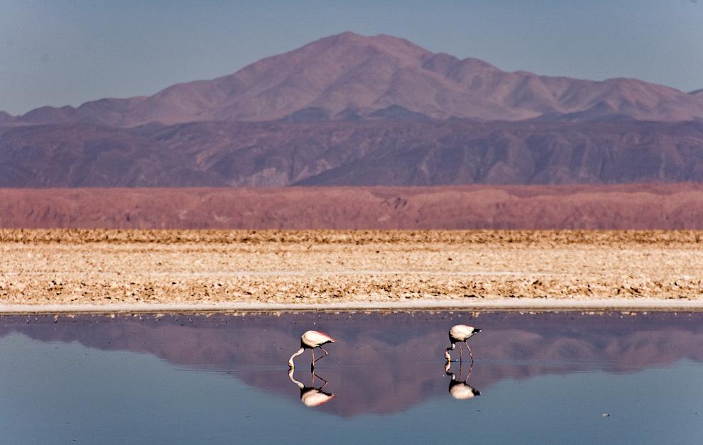 La reserva nacional de los Flamencos es un refugio de 74.000 hectáreas ubicada a 100kmts de San Pedro de Atacama y a 320 de Antofagasta.(Roberto Dam)