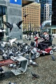 Pigeons Downtown