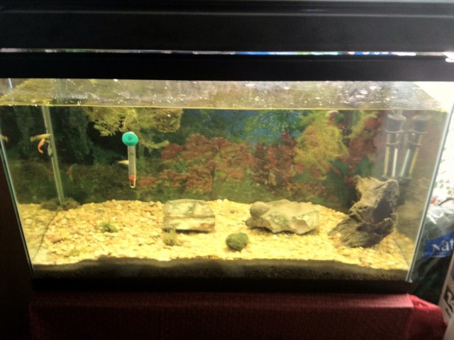 Help with my Freshwater tank!   Freshwater & Saltwater Aquarium Forum