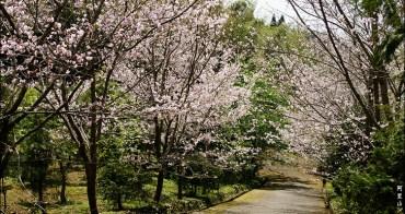 旅行︱嘉義石棹.旅行中的意外驚喜~發現櫻花祕境