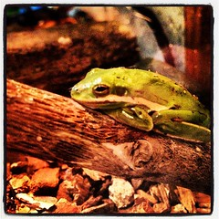 Added a green tree frog to the mix