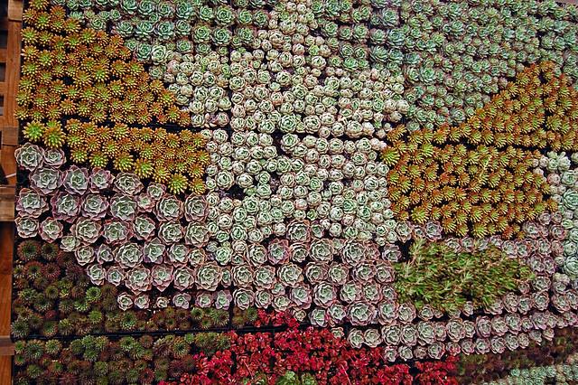 Succulent Gardens' Growing Wall Garden