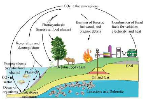 NCERT Solutions Class 12th Biology: Chapter 14 – Ecosystem