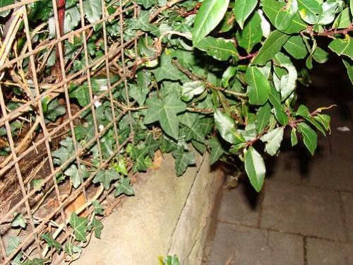 Jar No 358 in situ
