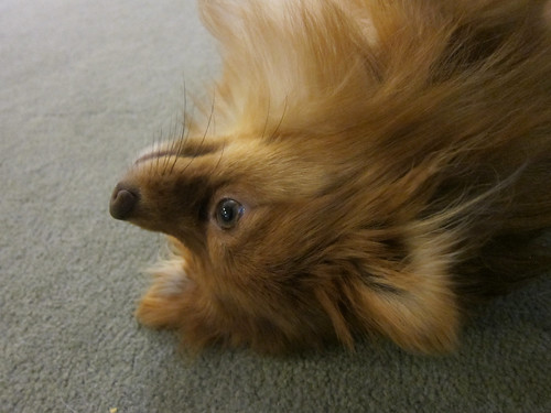 Upsidedown Dog