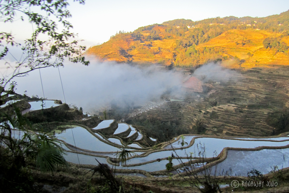 Rice Terrace in the morning - to Luchen