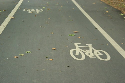 Leaves across the ground in Hyde Park cycle lane
