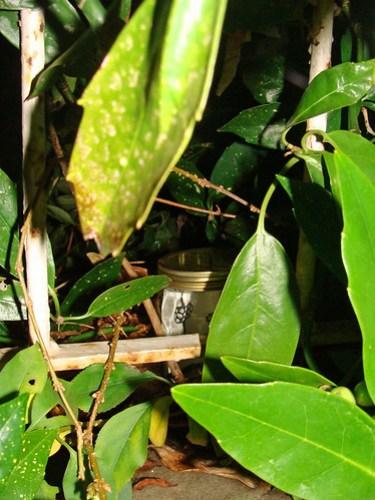 Jar No 325 in situ 01