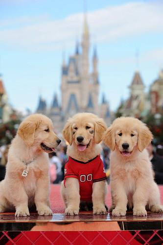 Pups tape TV special at Walt Disney World