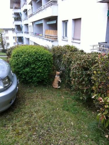 New Cats 277.jpg