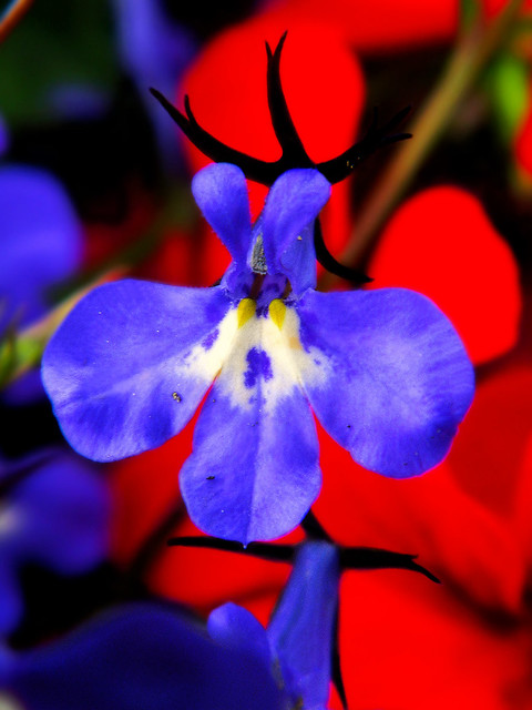 Vibrant Summer Blossoms (Explore # 476 March 12 2012) por Dave Smith