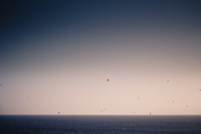 birds over the sea