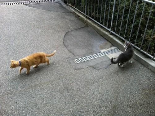 New Cats 191.jpg