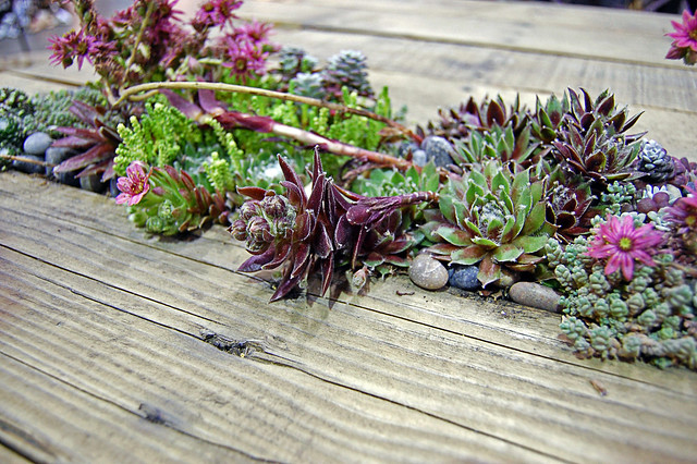 Succulent Pallet Table