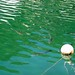 Poissons dans le port de Cala Figuera