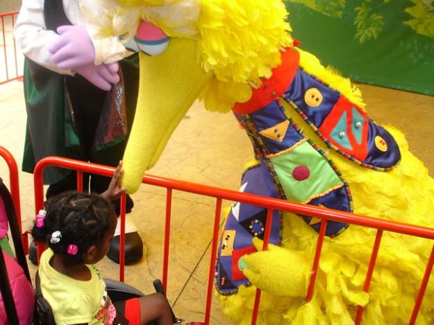 Big Bird at Busch Gardens