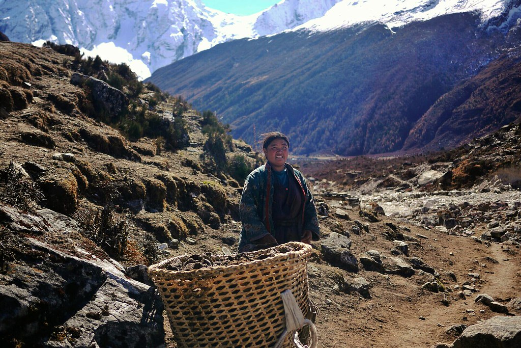 Tibetan woman collects dung