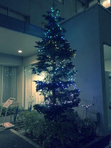 病院のツリー